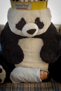 Paigu the panda is probably the biggest thing I've seen ever.